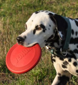 Daya Frisbee